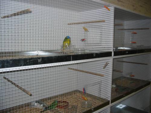 Fabrication d'une cage en plastique . Fini2